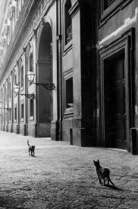 Leonard Freed gatto