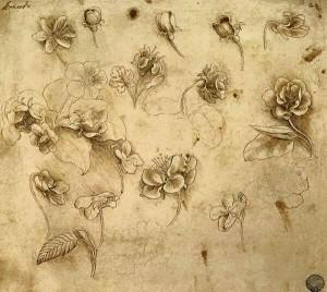 da vinci studio di fiori