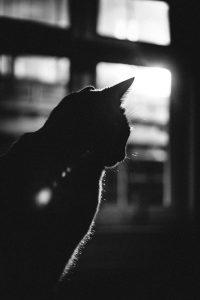 gatto innamorato ctm a noi piace leggere
