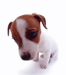 filippo alosi sad cute puppy