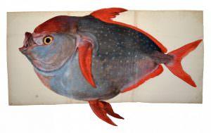 pesce re cctm caracas nazzaro savoia toirno