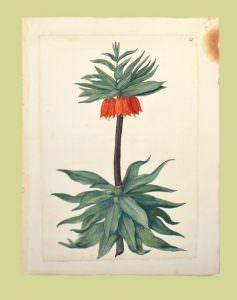 Album dei fiori biblioteca reale seicento settecento torino savoia cctm caracas