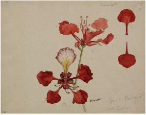 Auguste Morisot artistas viajeros cctm caracas