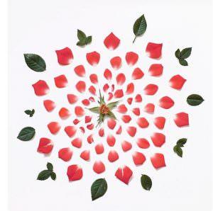 delmira agustini amore amor vida cctm caracas rosa uruguay