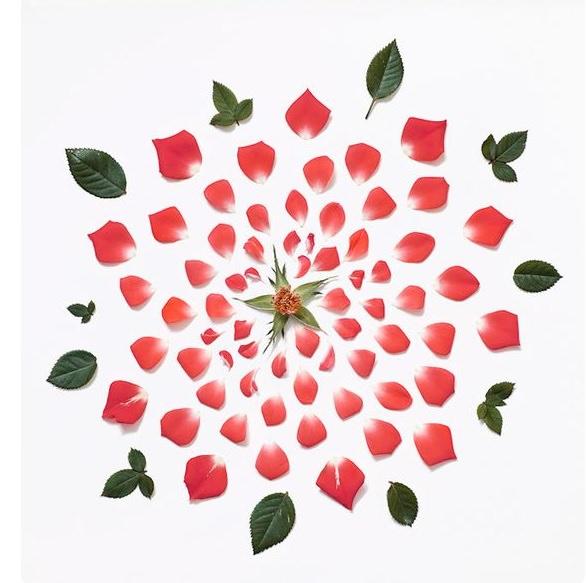delmira agustini esplode amore amor vida cctm caracas rosa uruguay poesia latino america italia arte amore bellezza cultura miglior sito poesia miglior sito letterario