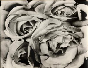 tina modotti rose cctm caracas fotografia