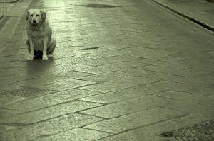 tom rachel ragazza del treno amore sei come cane cctm caracas