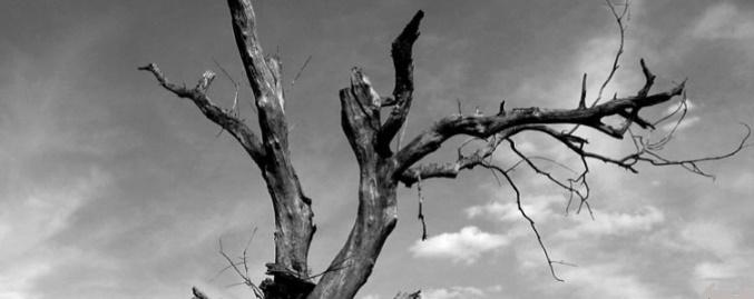 sad tree John Galán Casanova giorno notte luna sole morte vita rami albero cielo cctm caracas nazzaro