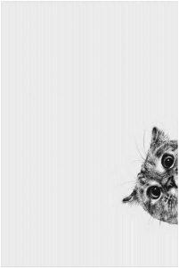 pablo neruda cile cctm caracas gatto poesia latino america