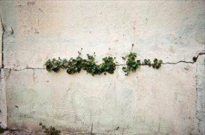 ernesto sabato argentina latino america scrittori poesia cctm caracas crepa vita erba