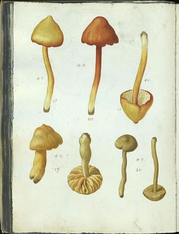 Pier Antonio Micheli firenze botanica micologia cctm caracas poesia arte latino america