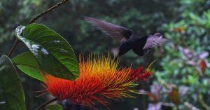 combretum rotundifolium amazon rainforest flowers fiori amazzonia cctm arte amore bellezza cultura italia latino america poesia miglior sito letterario miglior sito poesia leggere