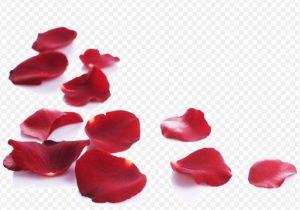 guido gozzano amore rose cctm arte cultura bellezza poesia italia latino america leggere miglior sito poesia miglior sito lettrarario