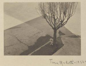 tina modotti 1924 tree with dog cctm fotografia italia latino america arte amore bellezza cultura poesia miglior sito letterario miglior sito poesia