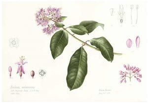 Diana Carneiro brazil arte botanica cctm amore cultura bellezza poesia italia latino america miglior sito letterario miglior sito poesia