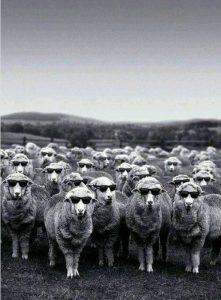 pecore matte cctm dante alighieri