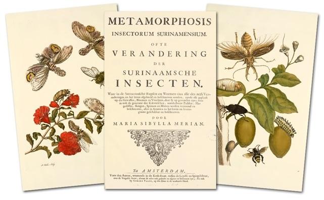 maria sybilla merian Metamorphosis insectorum Surinamensium, 1705 suriname cctm arte cultura