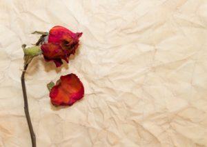 alda merini cattiveria cctm poesia donne amore