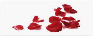Sergej Esenin bacio rosa cctm amore poesia a noi piace leggere