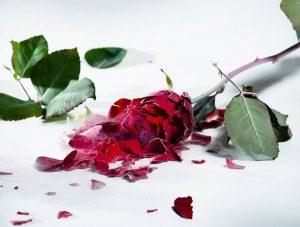 Gloria Fuertes España poesia amore cctm a noi piace leggere
