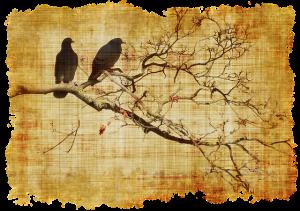 antonio nazzaro poesia uccelli cctm a noi piace leggere