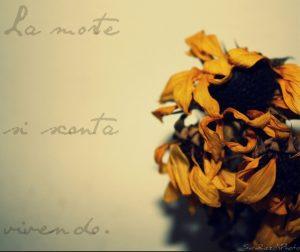 ungaretti la morte cctm poesia a noi piace leggere italia